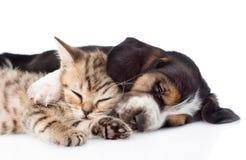 Chiot de chien de chaton et de basset dormant ensemble D'isolement sur le blanc Photographie stock