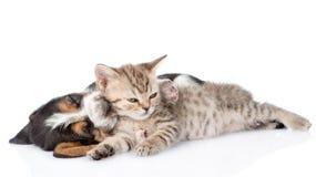 Chiot de chien de chaton et de basset dormant ensemble D'isolement sur le blanc Photo libre de droits