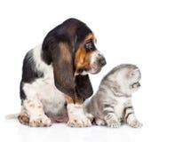 Chiot de chien de chaton et de basset regardant au côté D'isolement sur le blanc Photographie stock libre de droits