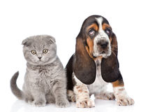 Chiot de chien de chaton et de basset se reposant ensemble D'isolement sur le blanc Photographie stock libre de droits