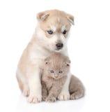Chiot de chien de traîneau sibérien étreignant le chaton écossais D'isolement sur le blanc Photographie stock libre de droits