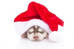 Chiot de chien de traîneau sibérien dans le chapeau rouge de Noël de Santa Claus sur le backgr blanc Image libre de droits