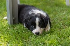 Chiot de chien fatigué dans l'herbe Photographie stock