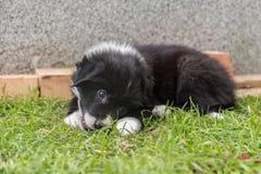 Chiot de chien jouant dans le jardin Photos stock