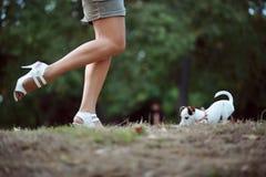 Chiot de chien terrier de Jack Russel Image stock