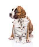 Chiot de croisement et chaton écossais ensemble D'isolement sur le blanc Photographie stock libre de droits