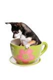 Chiot de cuvette de thé Image stock