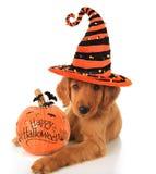 Chiot de Halloween Image stock