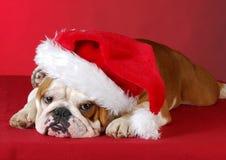 Chiot de Noël Photos libres de droits