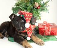 Chiot de Noël Photographie stock libre de droits