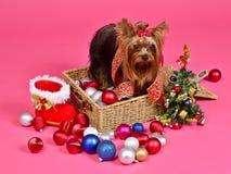 Chiot de Noël avec des billes, gaine de treegift d'an neuf Photographie stock libre de droits