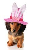 Chiot de Pâques photo stock