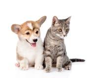 Chiot de Pembroke Welsh Corgi se reposant avec le chat ensemble et le regard Photographie stock