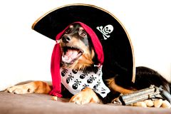 Chiot de pirate Photographie stock libre de droits
