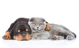 Chiot de rottweiler de sommeil étreignant le chaton mignon D'isolement sur le blanc Image libre de droits