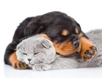 Chiot de rottweiler de sommeil étreignant le chaton mignon Sur le blanc Photo stock