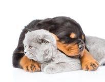 Chiot de rottweiler de sommeil étreignant le chaton mignon Sur le blanc Photo libre de droits