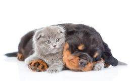Chiot de rottweiler de sommeil étreignant le chaton nouveau-né D'isolement sur le blanc Image stock