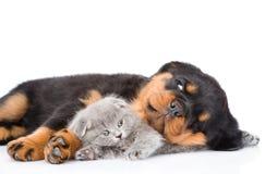 Chiot de rottweiler de sommeil étreignant le chaton nouveau-né D'isolement sur le blanc Photographie stock libre de droits