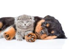 Chiot de rottweiler de sommeil étreignant le chaton nouveau-né D'isolement sur le wh Photo stock