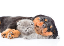 Chiot de rottweiler de sommeil étreignant le petit chaton D'isolement sur le petit morceau Photos libres de droits