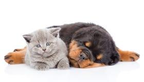 Chiot de rottweiler de sommeil étreignant le petit chaton D'isolement sur le petit morceau Photographie stock libre de droits