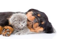 Chiot de rottweiler de sommeil huging le chaton mignon D'isolement sur le blanc Image stock