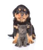 Chiot de rottweiler et petit chaton se reposant ensemble d'isolement en fonction Photo stock