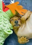 Chiot de sommeil Images libres de droits