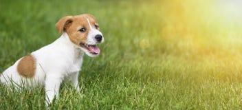 Chiot de sourire heureux de chien se reposant dans l'herbe Photographie stock libre de droits