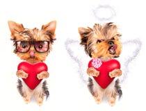 Chiot de valentine d'amant avec un coeur rouge Image stock