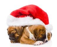Chiot deux mignon avec le chapeau de Santa D'isolement sur le fond blanc Images stock