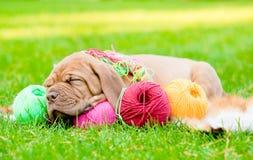 Chiot dormant avec des boucles de fil sur l'herbe verte Photographie stock