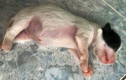Chiot dormant bien photographie stock