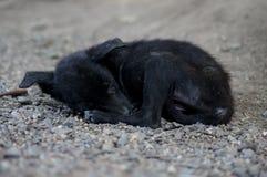 Chiot dormant dans le domaine de roche Images libres de droits