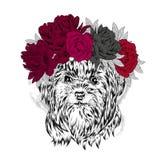 Chiot drôle dans une guirlande de fleur Illustration de vecteur Yorkshire Terrier Photos libres de droits