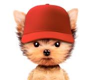 Chiot drôle dans le chapeau de base-ball d'isolement sur le blanc Photo stock