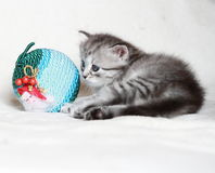 Chiot du chat sibérien avec la boule de Noël Images stock
