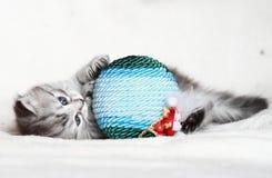 Chiot du chat sibérien avec la boule de Noël Photo stock