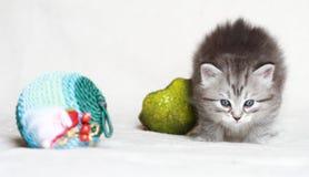 Chiot du chat sibérien avec la grenade de Noël Photos stock
