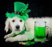 Chiot du jour de St Patrick Photographie stock