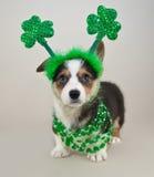 Chiot du jour de St Patrick images libres de droits