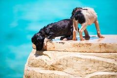 Chiot du sans-abri deux sur la plage Images stock