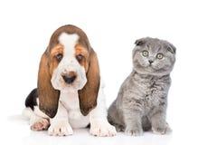 Chiot et chat de chien de basset se reposant ensemble d'isolement sur b blanc Images stock