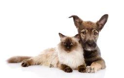Chiot et chat ensemble D'isolement sur le fond blanc Photo libre de droits
