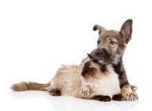 Chiot et chat mélangés de race ensemble D'isolement sur le fond blanc Images stock