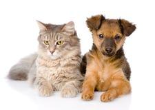 Chiot et chat mélangés de race ensemble D'isolement sur le fond blanc Image stock