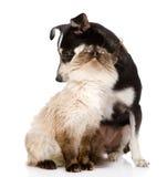 Chiot et chat mélangés de race ensemble Sur le fond blanc Images stock
