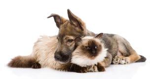 Chiot et chat mélangés de race ensemble Sur le fond blanc Photographie stock