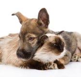Chiot et chat mélangés de race ensemble Sur le fond blanc Photo libre de droits
